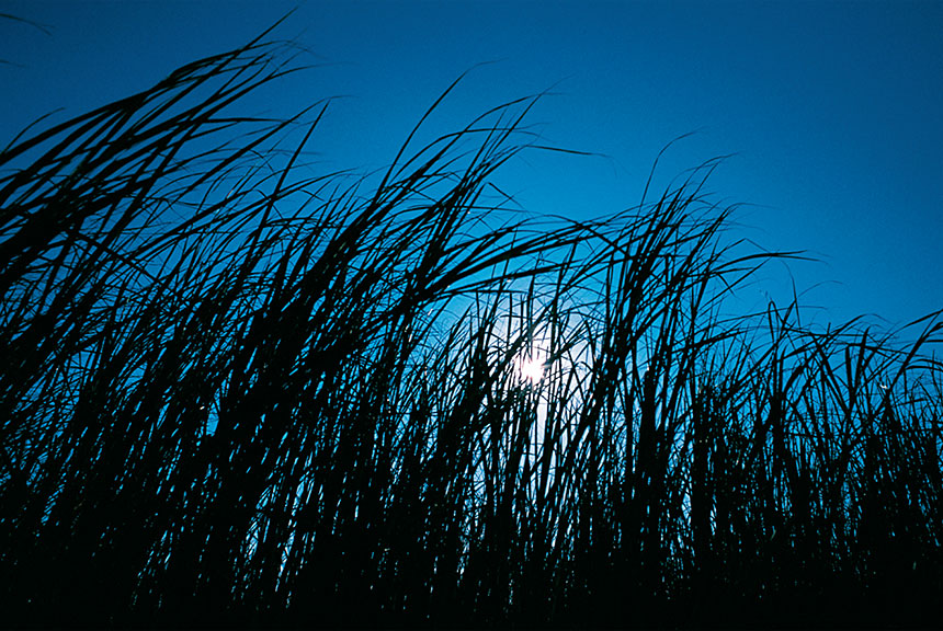 2007 / Roda Countryside